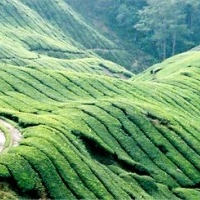 Vanilla County homestay, An Eco - Agri - Tourism project at the Western Ghats