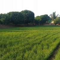 Phalke Farm, Hurda Party and Agrotourism