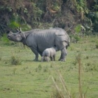 Kaziranga National Park, Bokakhat, Golaghat District, Assam