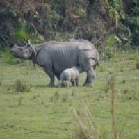 Kaziranga National Park, Bokakhat, Golaghat District, Assam