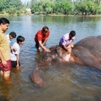 Dubare Elephant Camp, Coorg, Karnataka
